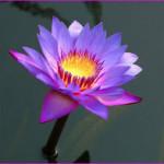 Послание 252. Таинство Медитации
