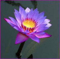 Послание 252 Таинство Медитации